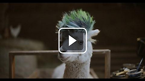 """Samsung """"Alpaca"""" spot"""